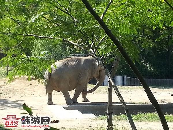 大动物馆——大象