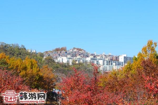 盘松是韩国人民非常喜欢的松树,生命力顽强,枝繁叶茂,象征中韩友谊